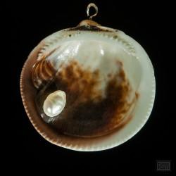 Meermandel-Anhänger mit Süsswasserperle - Innenansicht